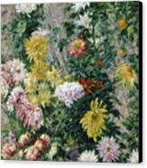 White And Yellow Chrysanthemums Canvas Print by Gustave Caillebotte