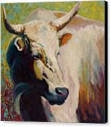 White Bull Portrait Canvas Print by Marion Rose