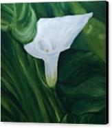 White Calla Canvas Print