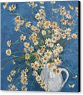 White Chamomile Flowers With Blue Background Canvas Print