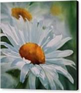 White Daisies Canvas Print by Sharon Freeman