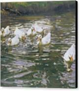 White Ducks On Water Canvas Print