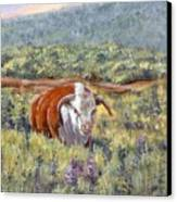 White Face Bull Canvas Print