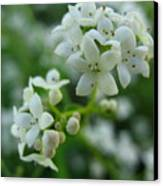 White Floral Cluster Canvas Print