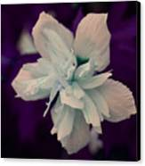 White Flower W/purple Background Canvas Print