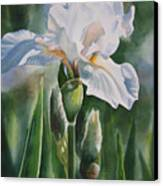 White Iris With Bud Canvas Print by Sharon Freeman