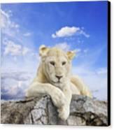 White Lion Canvas Print by Anek Suwannaphoom