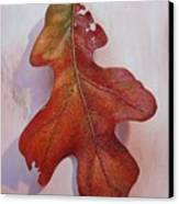 White Oak Leave Canvas Print