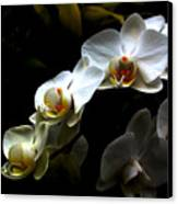 White Orchid With Dark Background Canvas Print by Jasna Buncic