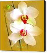 White Orchids Canvas Print by Doris Wood