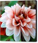 White Red Flower Canvas Print by Jame Hayes