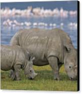 White Rhino Mother And Calf Grazing Canvas Print by Ingo Arndt