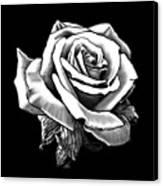 White Rose Canvas Print by Melodye Whitaker
