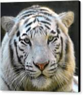 White Tiger Canvas Print