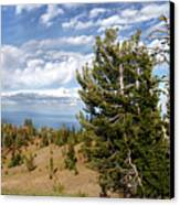 Whitebark Pine Trees Overlooking Crater Lake - Oregon Canvas Print by Christine Till
