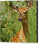 Whitetail Doe Painterly Canvas Print by Ernie Echols