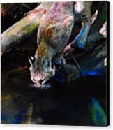 Wild Cat Drinking Canvas Print