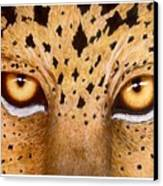Wild Eyes Canvas Print