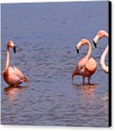 Wild Flamingos Canvas Print