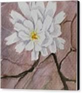 Wild Flower On The Rocks Canvas Print