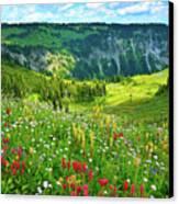 Wild Flowers Blooming On Mount Rainier Canvas Print