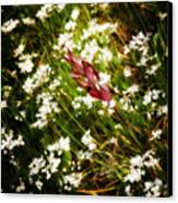 Wild Flowers Canvas Print by Stelios Kleanthous