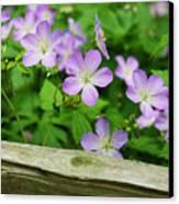 Wild Geraniums Canvas Print