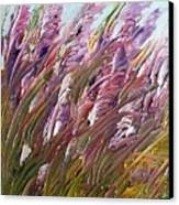 Wild Gladiolas Canvas Print by Robert Laper