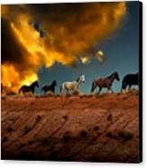 Wild Horses At Sunset Canvas Print by Harry Spitz