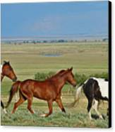 Wild Horses Wyoming Canvas Print