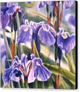 Wild Irises #1 Canvas Print by Sharon Freeman