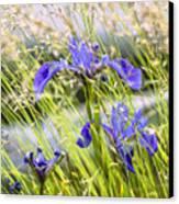 Wild Irises Canvas Print by Marty Saccone