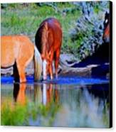 wild Palomino stallion of the Great Basin Country  Canvas Print