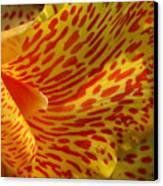 Wild Petals Canvas Print
