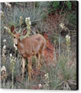 'wild' Times At Garden Of The Gods Colorado Canvas Print by Christine Till