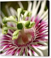 Wild Tropical Flower Canvas Print