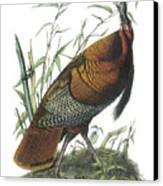 Wild Turkey Canvas Print by John James Audubon