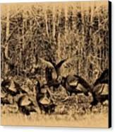 Wild Turkeys Canvas Print by Bill Cannon
