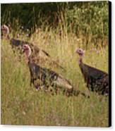 Wild Turkeys Canvas Print by Michael Peychich