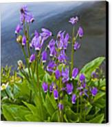 Wildflower Cascade Canvas Print by Mike  Dawson