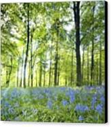Wildflowers In A Forest Of Trees Canvas Print