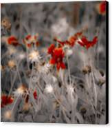 Wildflowers Of The Dunes Canvas Print