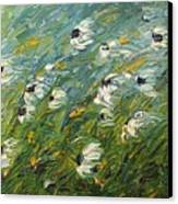 Wind Swept Daisies Canvas Print by Robert Laper