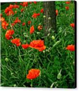 Windblown Poppies Canvas Print