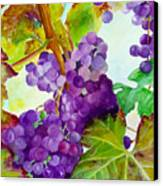 Wine Vine Canvas Print