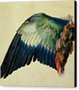 Wing Of A Blue Roller Canvas Print