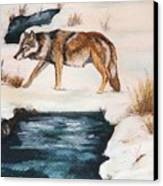 Winter Coyote Canvas Print