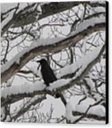 Winter Crow Canvas Print