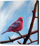 Winter Finch Canvas Print