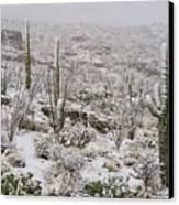 Winter In The Desert Canvas Print by Sandra Bronstein